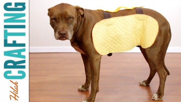 How To Make A Halloween Costume For Your Dog!