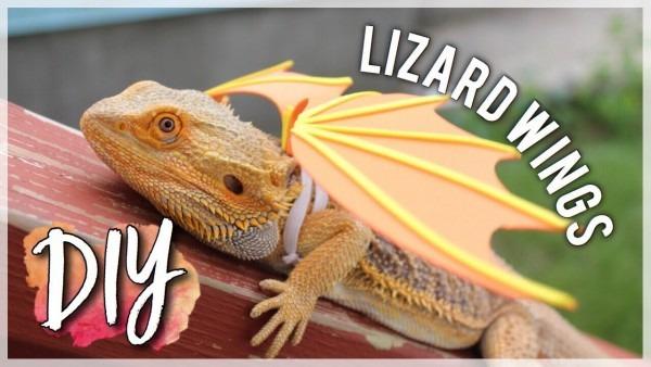 Diy Lizard Wings! (easy!)