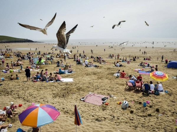 What Happens When Seagulls Attack  'it's A War Zone, We Are Even