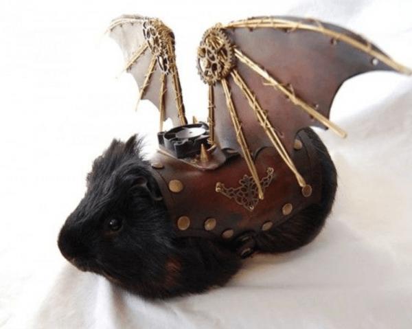 Creative Guinea Pig Costumes