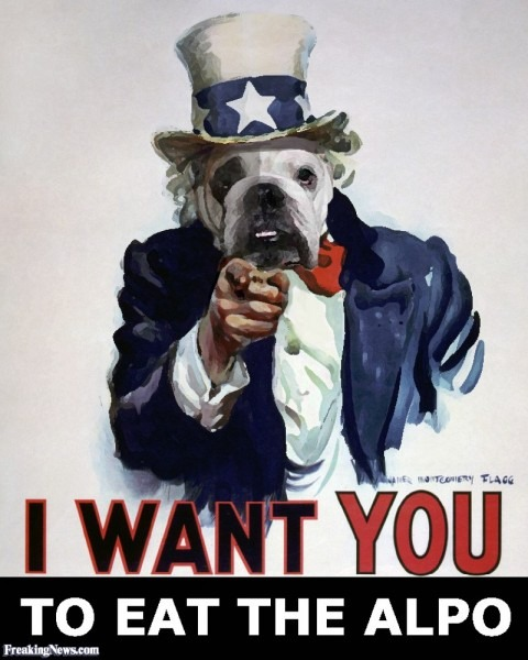 Uncle Sam The Dog Pictures
