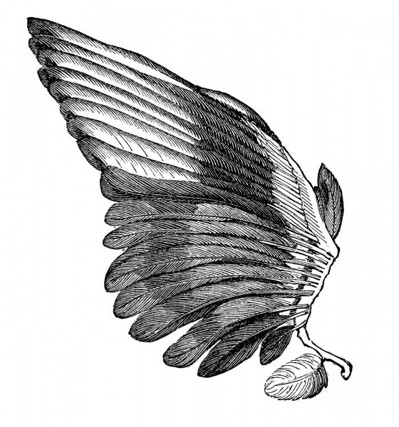 Vintage Clip Art Image