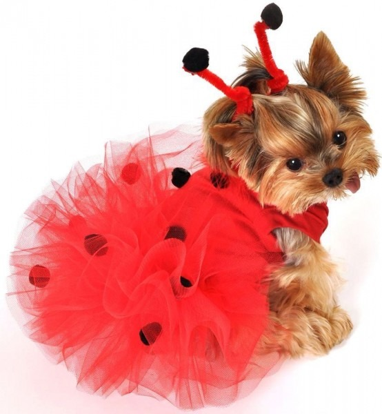 Wishing I Had A Female Yorkie Dog Lovers Best Party Supply Designs Of