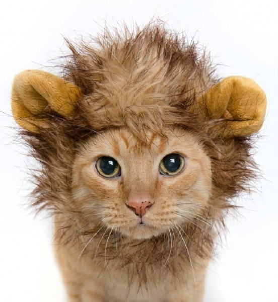 Pet Krewe Lion Mane Cat And Dog Costume