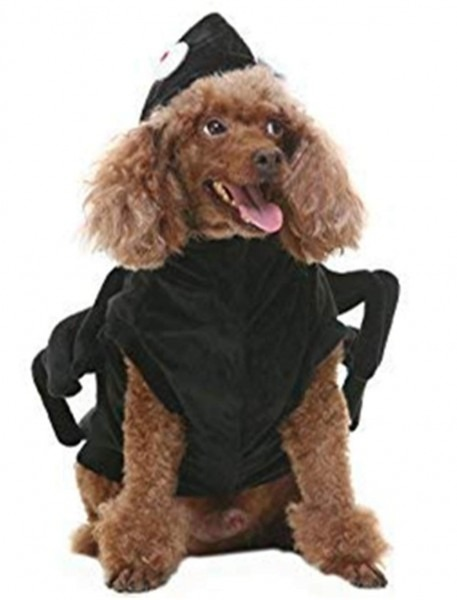 Amazon Com   Bingpet Spider Dog Halloween Costume Black Small