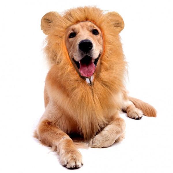 Amazon Com   Besazw Dog Halloween Costumes Dog Lion Mane Medium