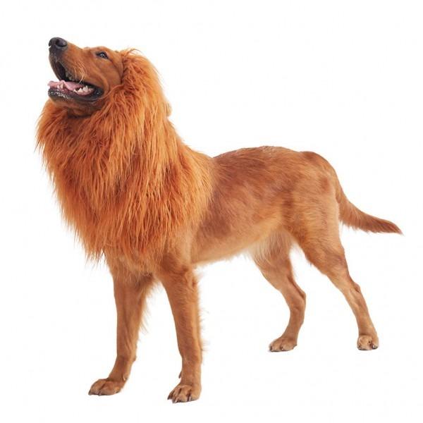 Amazon Com   Supronto Inc Pet Costume Dog Lion Mane Adjustable