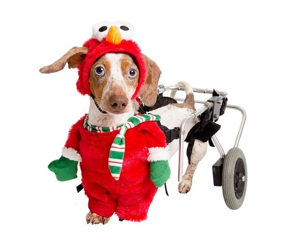 Amazon Com   Pet Krewe Pk00401m Sesame Street Santa Elmo Walking
