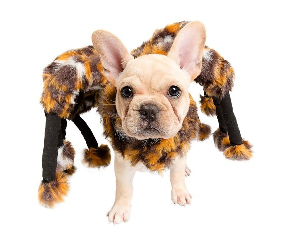 Amazon Com   Pet Krewe Pk00201 Spider Costume For Small Dogs