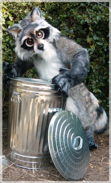 Raccoon In Trash Can Related Keywords & Suggestions