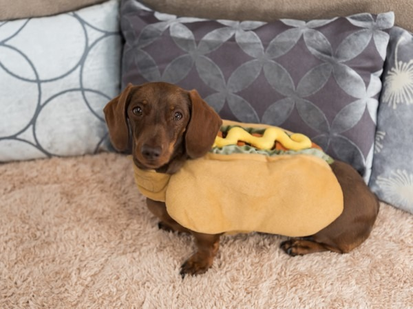 Cute Costumes For Sausage Dogs