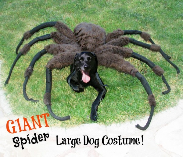 Giant Spider Dog Costume!  7 Steps (with Pictures)