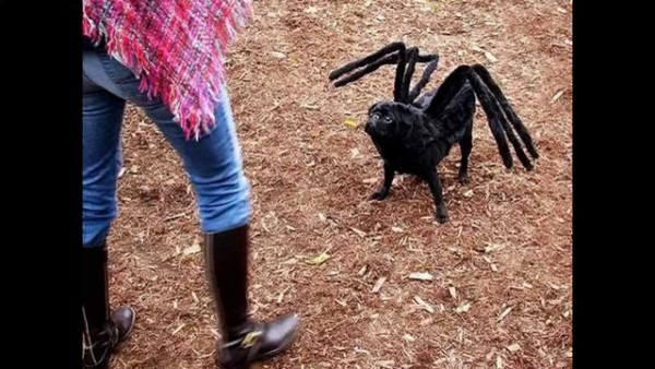 More Mutant Giant Spider Dog Costume For Sale