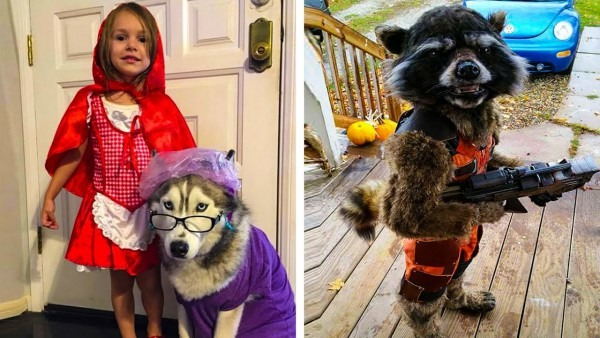 The Most Creative Halloween Costume Ideas Ever