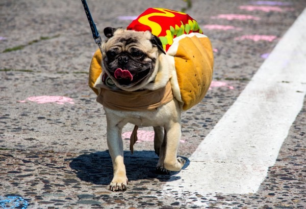 Photos  Halloween Dogs In Hot Dog Costumes