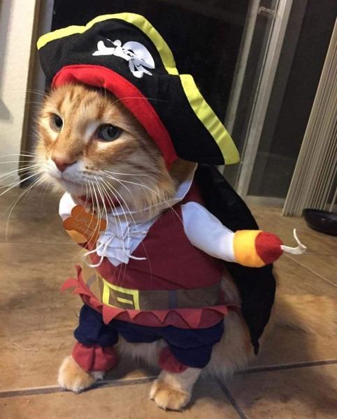 26 Pet Cat Halloween Costumes 2018