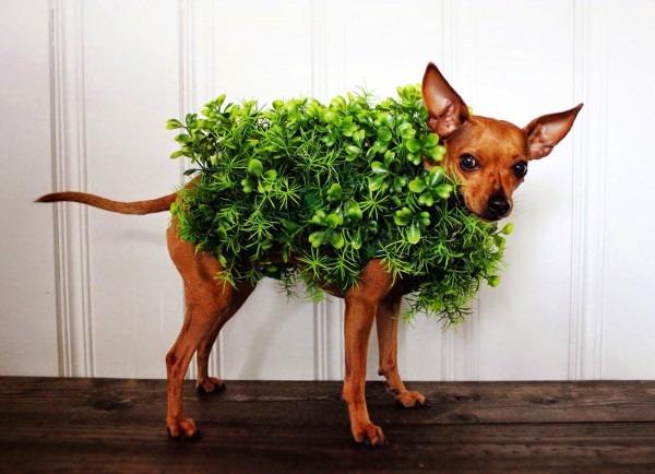 Barktober's Best Dog Halloween Costumes