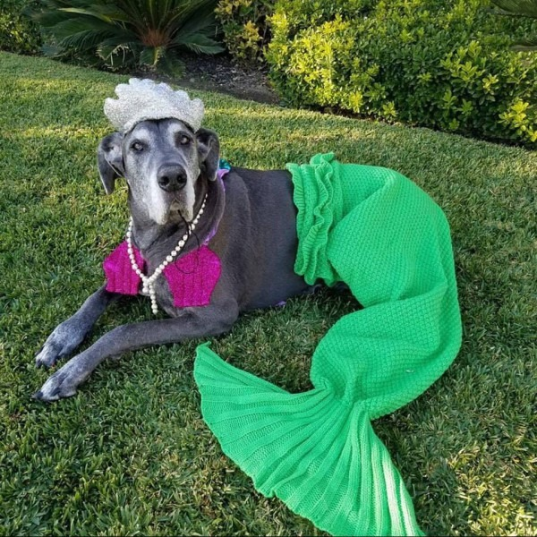 60+ Costumes That Prove Great Danes Always Win At Halloween