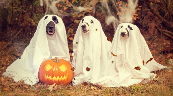 5 Ways To Make Halloween Safe For Animals
