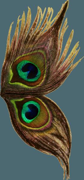 Peacock Wings Dark Png