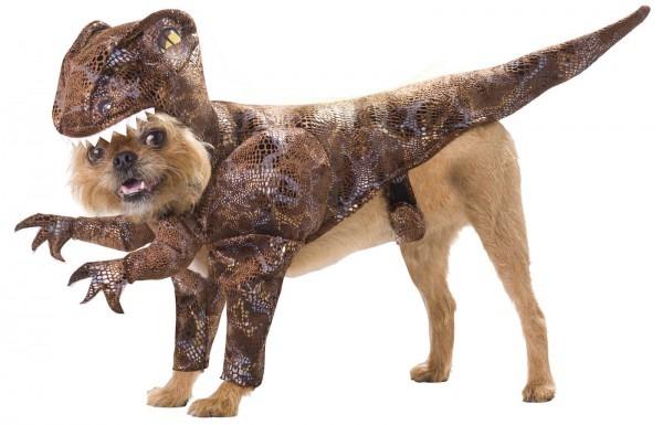 Shark Costume For Dogs &
