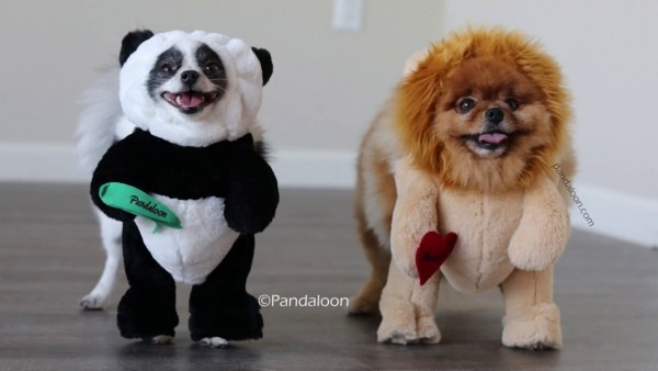 Pandaloon Panda Puppy And Friends Halloween Costumes As Seen On